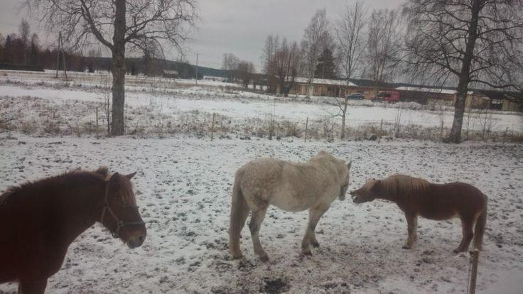 joulukuu 2014, Sanna, Hopsu ja Musse