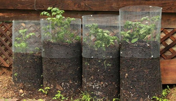plus de 25 id es magnifiques dans la cat gorie culture pomme de terre sur pinterest cultiver. Black Bedroom Furniture Sets. Home Design Ideas