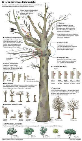 Cómo podar los árboles adecuadamente. #jardinería