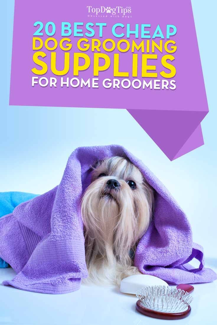 Top 20 Best Cheap Dog Grooming Supplies for Pet Groomers. It's becoming very popular for pet owners to groom their dogs at home, instead of using professional services. Many dog owners who are living on a budget often seek out best cheap dog grooming supplies that will not break the bank, and rightfully so. #dogs #doggrooming #dogsupplies