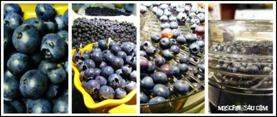 How to dry blueberries - homemade dehydrated blue berries