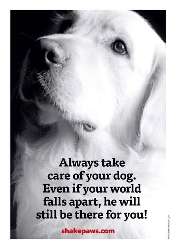 AMEN AMEN!!! RIP NUGGET! | Dog quotes, Dog love, Dogs