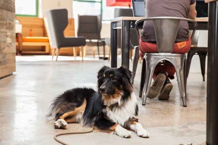 Spotted: Etsy's New Dog-Friendly Office in DUMBO