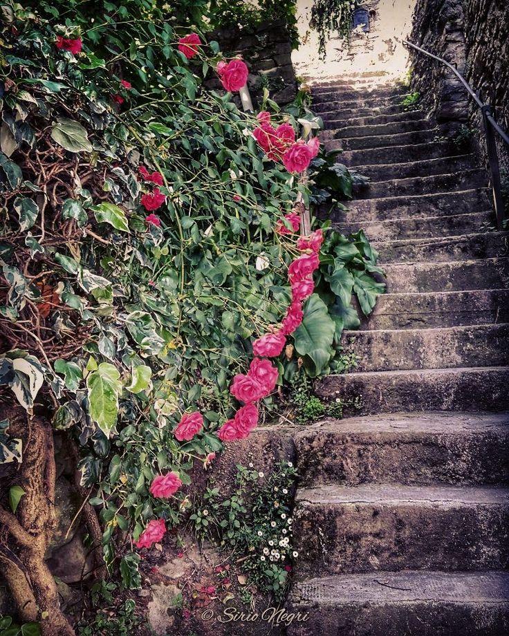 Rose e scalette