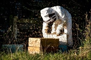 Beehive thefts are making life tough for beekeepers who say police have little to no interest in the matter.