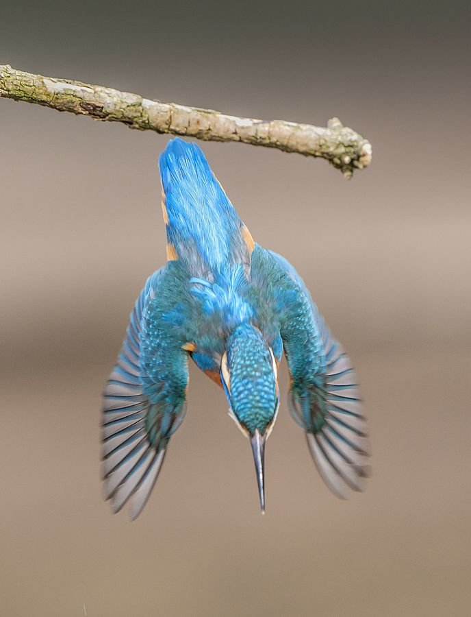 Kingfisher By Nick Holland On 500px