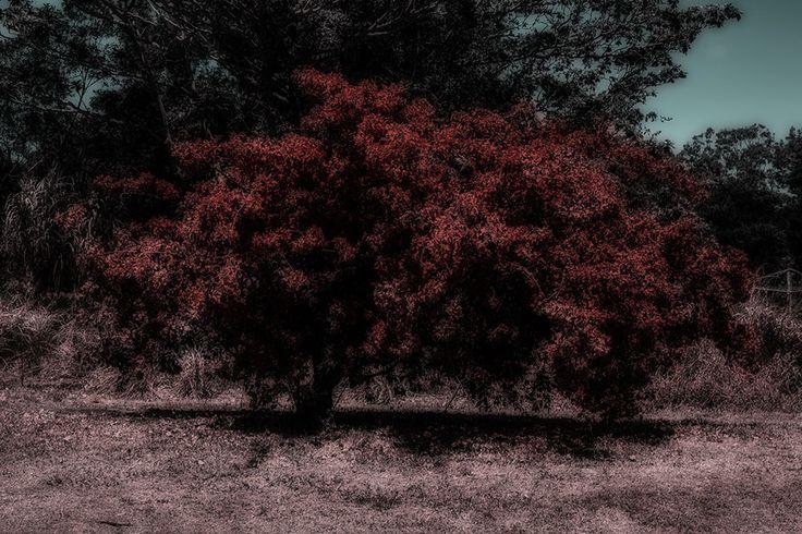 Burning bush photo artwork by Janne Amalie Svit at Image Troopers