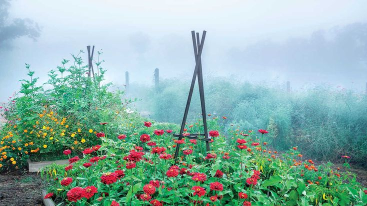 The Secret Veggie Garden - Southern Living - Edibles get a bad rap for being unsightly, but P. Allen Smith's Arkansas farm proves these beds can be productive and pretty. Here, he offers tips for a beautiful (and useful!) veggie garden.
