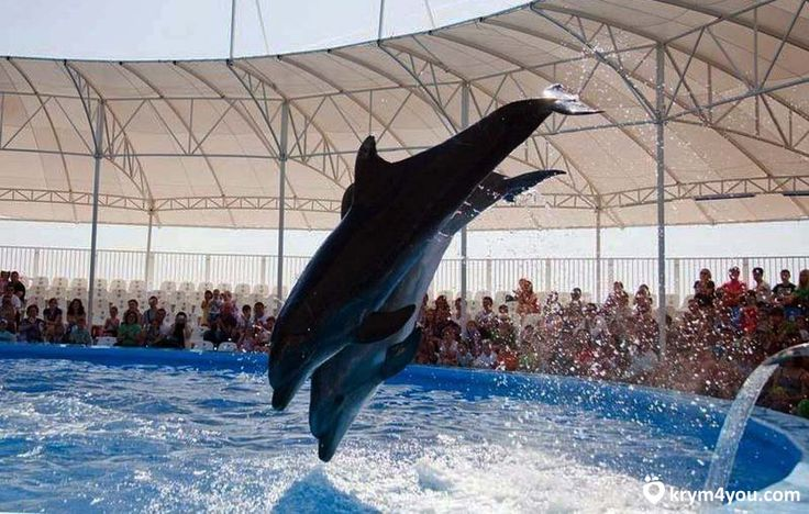 дильфинарии Крыма