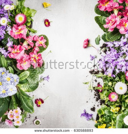Various colorful garden flowers and plants ,top view, frame. Floral border