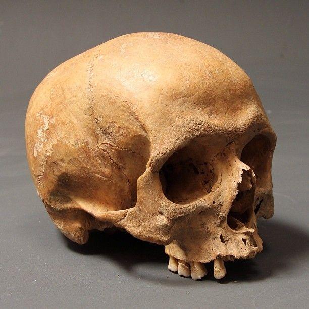 сходненский череп картинки кажется