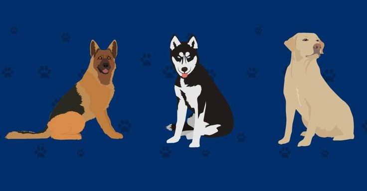 Top 10 dog breeds in the U.S. and why we love them. - Back to Basics explores which dog breeds are most popular in America, and asks dog owners to share which qualities they most love in their pets.
