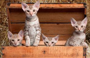 Katzen Shop - Zoo Roco - Schweizer Zoohandlung (Tierhandlung) für Haustier / Kleintier