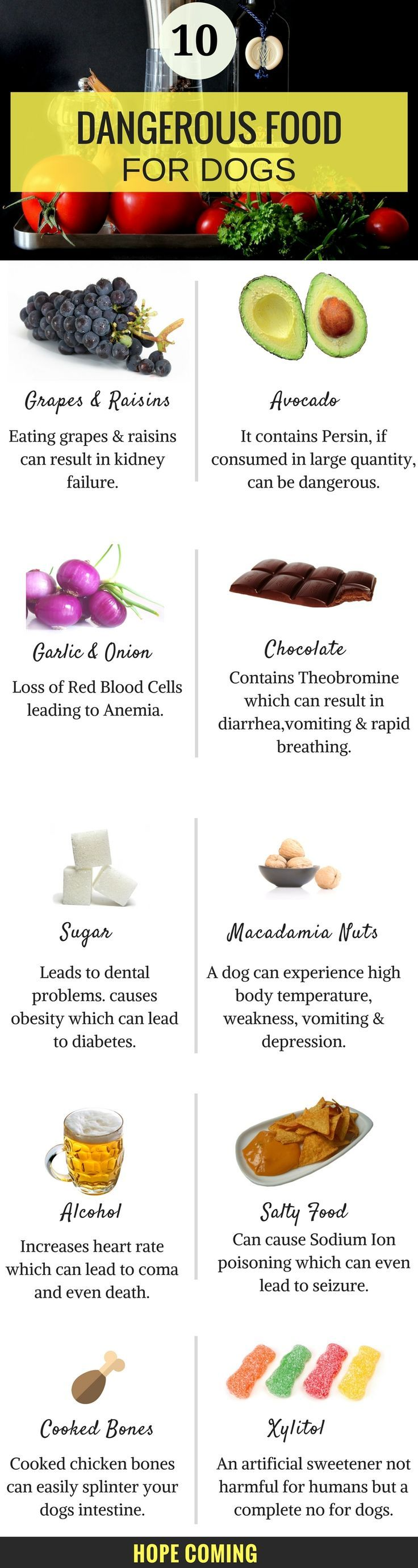 Are You tossing your food to your dog? Some of our foods can be very dangerous for our dogs, Here is the list of Top 10 Foods that are dangerous for dogs. | Dog health Tips | Dog Food | Dog Infographics |  https://hope-coming.com/