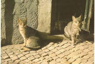 Coisas do Offline: Espantar gatos do quintal