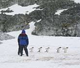 Editor's Picks: Best Antarctica Cruises - South America & Antarctica cruises - Cruise Critic