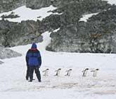 Editor's Picks: Best Antarctica Cruises - South America & Antarctica cruises - Cruise Critic