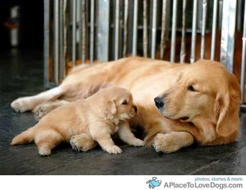 Doggy Newsletter - Doggy Parents and Pups - From A Place To Love Dogs
