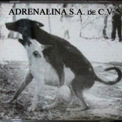 Adrenalina - SA de CV