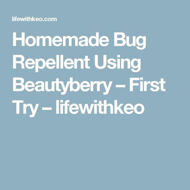 Homemade Bug Repellent Using Beautyberry – First Try – lifewithkeo