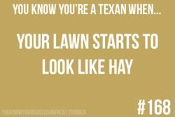 You know you're a Texan when...: Archive