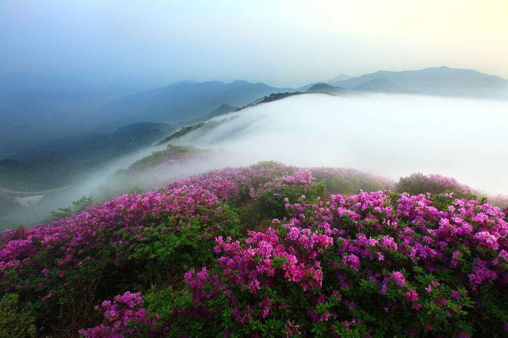 flower,flower,korea