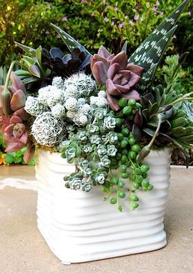 Hands On Workshop for Floral Style Succulent Container Arrangement