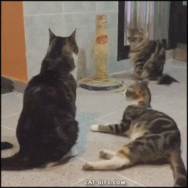 21 Best GIFs Of All Time Of The Week #159