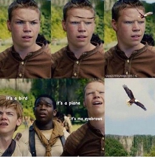 Maze runner fandom, u okay??>>Hah yah we're okay we're just kind of past the gone..