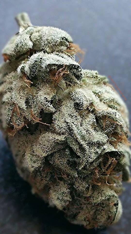 Beautiful bud - Marijuana Trichomes   Medical Marijuana Quality Matters   Repined By 5280mosli.com   Organic Cannabis College   Top Shelf Marijuana   High Quality Shatter