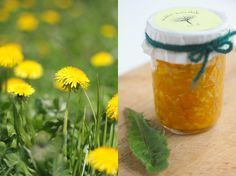 This recipe for Dandelion Marmalade uses the petals of the dandelion - our teas use the herb and root. To learn more about dandelion, visit our site at http://traditionalmedicinals.com/plants/dandelion/