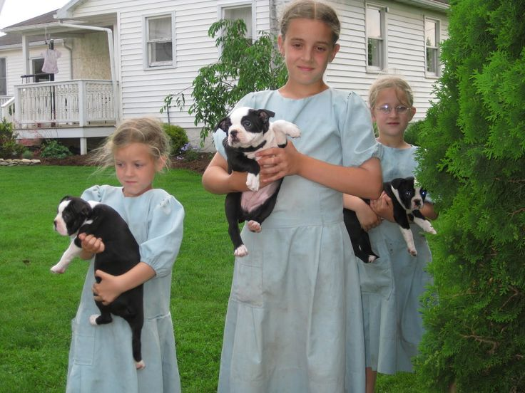 Amish girls with their puppies