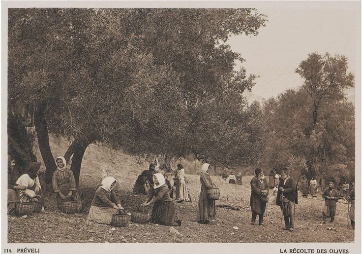OLIVE HARVEST...Preveli, Rethymnon, Crete...1919 BAUD-BOVY/ BOISSONNAS Collection: Aikaterini Laskaridis Foundation