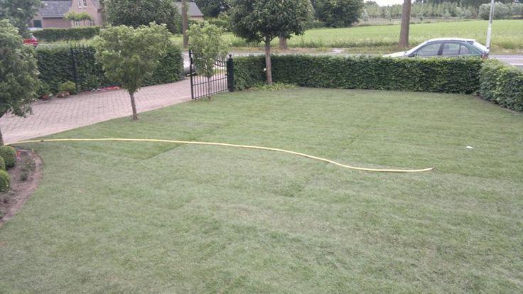 Nieuwgazon.nl > Professioneel graszoden laten leggen