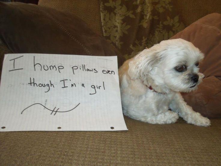 Small Dog Humps Stuffed Animal