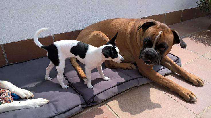Axel y Leo, los mejores amigos.