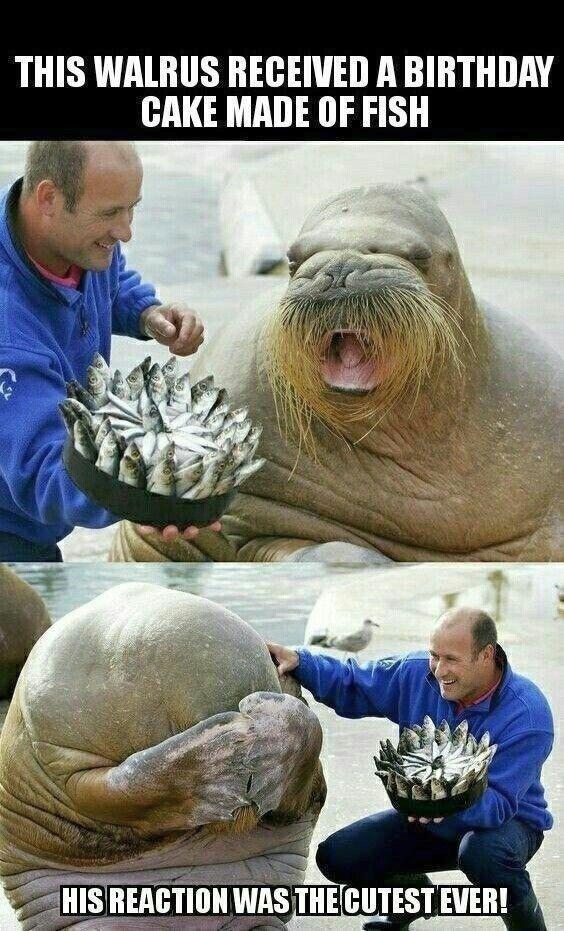 18 lustige Tier-Meme, die nur lustig sind – #die #lustig #lustige #nur #sind #Ti