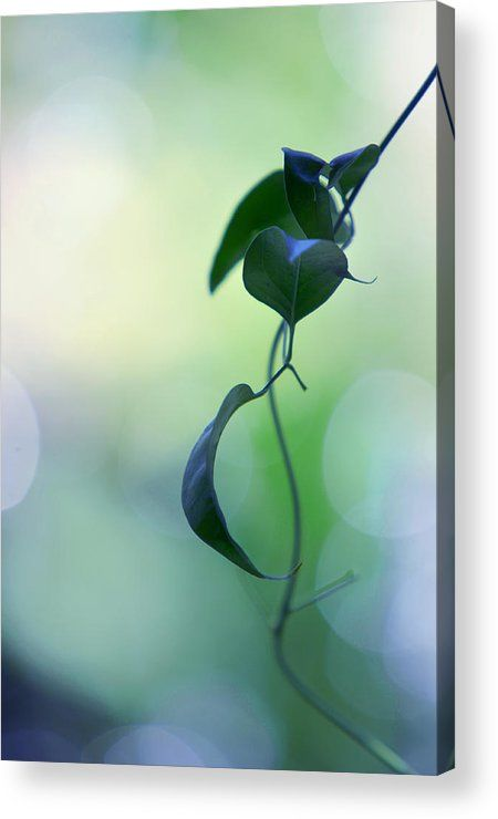The Unbearable Lightness Of Being. Natural Wonders Acrylic Print by Jenny Rainbow.  All acrylic prints are professionally printed, packaged, and shipped within 3 - 4 business days and delivered ready-to-hang on your wall. Choose from multiple sizes and mounting options.