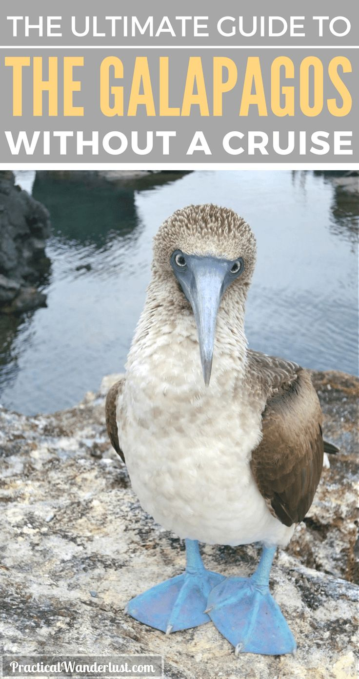 You don't need a cruise to visit the Galapagos Islands in Ecuador. Save a ton of money with this budget-friendly alternative! for Galapagos Islands travel!