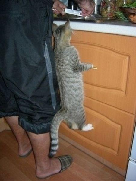 """握力 """"Grip strength""""  Some cats find the easiest ways to do things, others are more creative.  I like this cat's style!"""