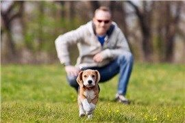 CoolPetZ | Social Pet Network Yavru köpek eğitimi konusunda ipuçları! #köpek #ipucu #CoolPetZ