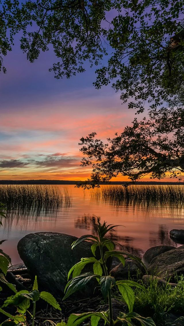 Sunset with water and trees