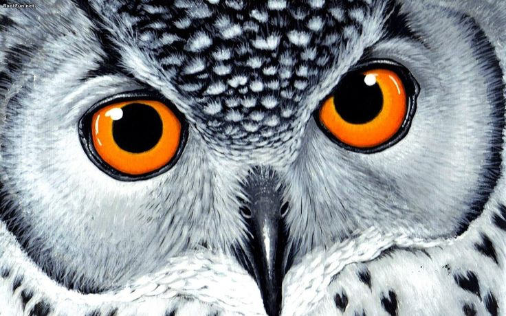 Orangeeyes Owl Wallpaper HD. Owls, Owl, Wallpaper, Hd ... Orangeeyes Owl Wallpaper HD. Owls, Owl, Wallpaper, Hd ...