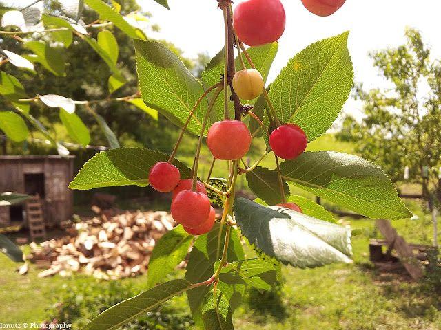 Ionutz Photography: Some cherries