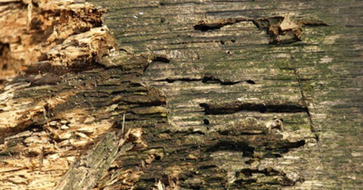 Cupins atacam casas de alvenaria?. Uma casa de alvenaria parece ser impenetrável para os cupins. Afinal, esses insetos xilófagos fazem túneis que destroem revestimentos e outras partes de madeira de uma casa. Mas mesmo se não houver nada de madeira na casa, os cupins poderão encontrar algo para comer. É mais difícil para eles entrarem em casas de alvenaria, mas assim mesmo podem ...