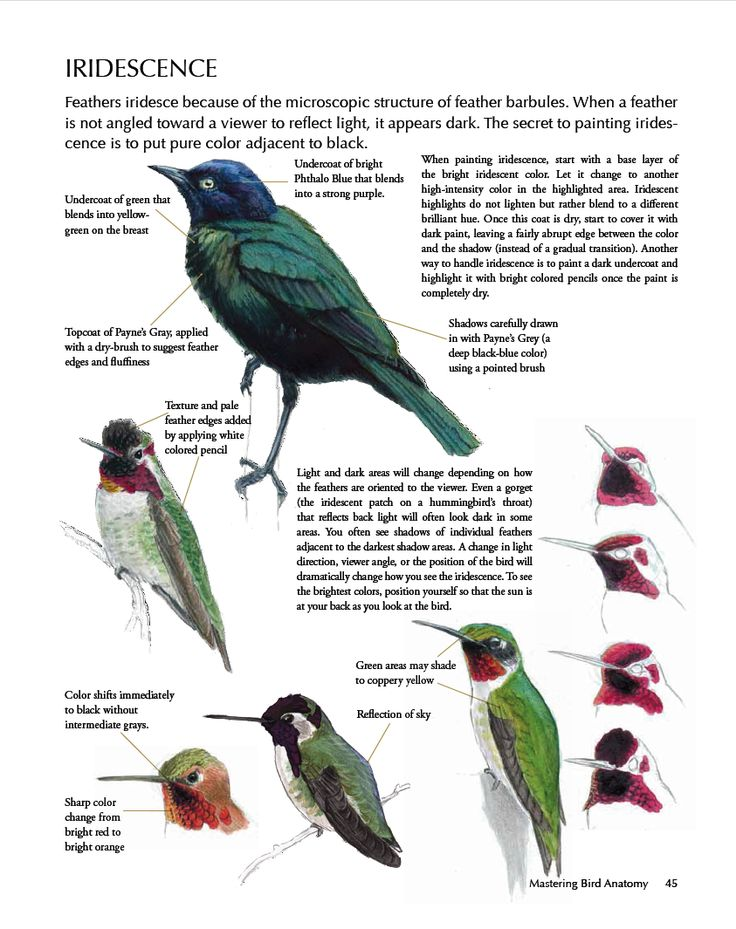 The 17 best images about bird anatomy on Pinterest