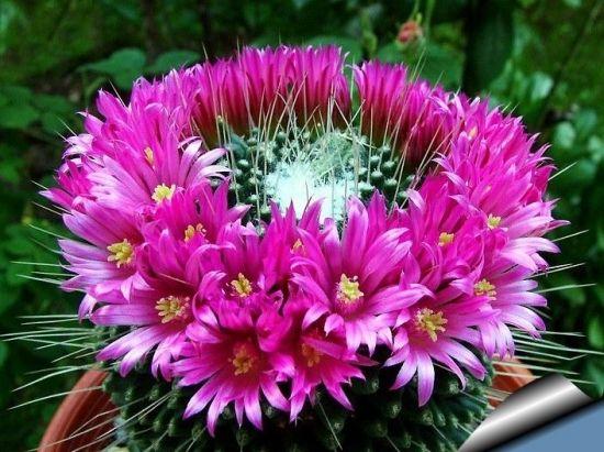 17 best images about flori de gradina arbusti ornamentali for Arbusti ornamentali
