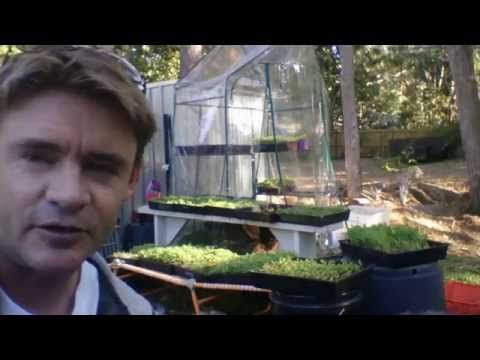 Multiple Uses Cheap Racks to Grow Microgreens and Seedlings at Home - YouTube