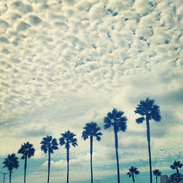 fish scale clouds photo by @Jonathan Lo / happymundane on Instagram