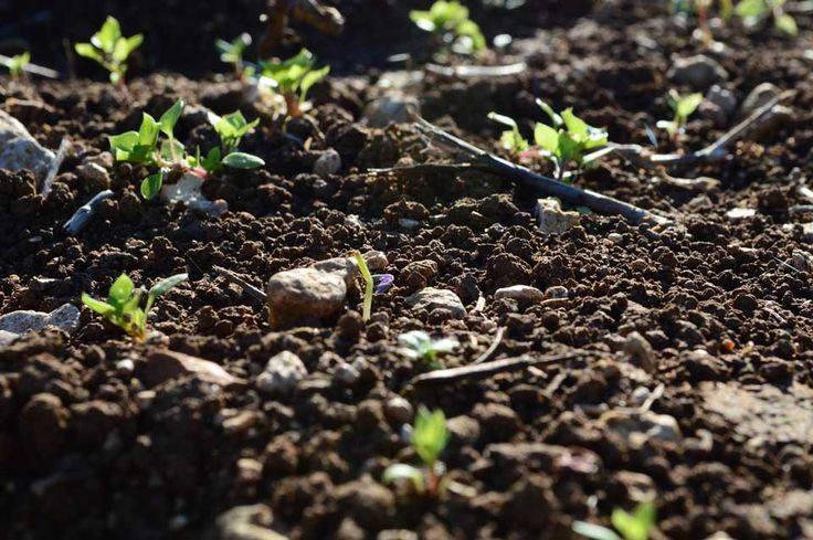 Why Knowing Your Soil pH is Important